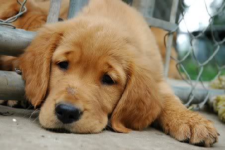 Sad Puppies   What the Pup is Up?  Sad