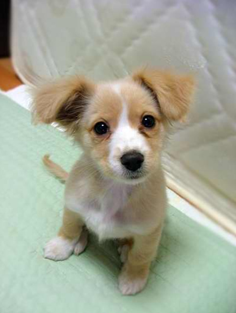 Pics For > Cute Sad Puppy Photos